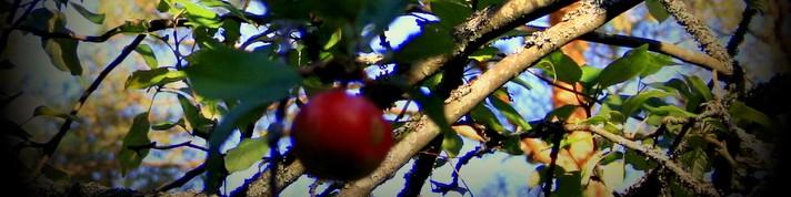 Mitä ovat Hengen hedelmät?
